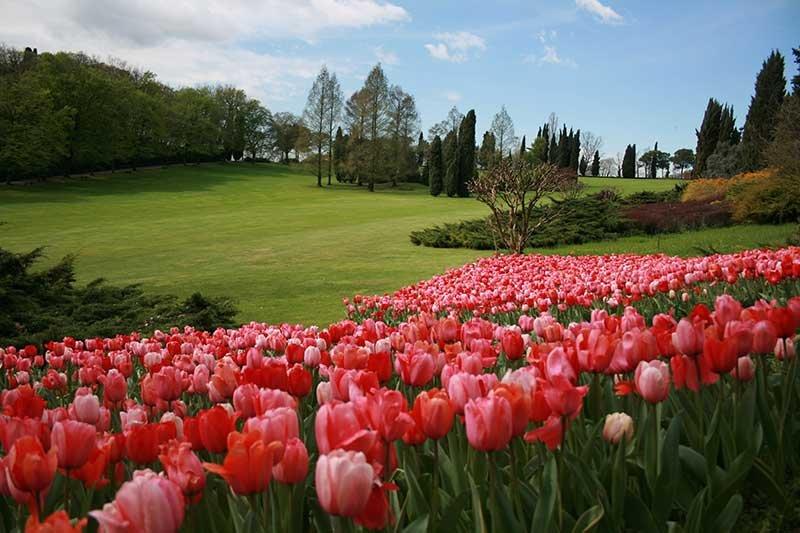 Parco Giardino Sigurtà_Tulipanomania_2_tulipani_MilanoPlatinum