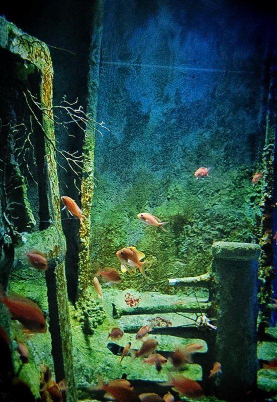 Acquario civico di expomilano 1906 for Pesci rossi costo