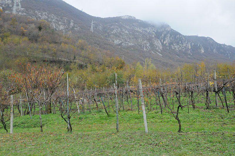 Botticino marmo e vino_AIS Milano_MilanoPlatinum