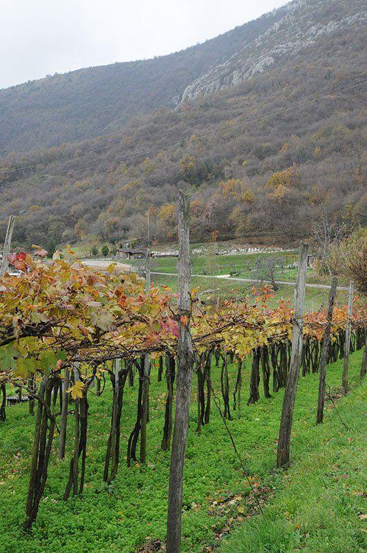 Botticino marmo e vino_MilanoPlatinum