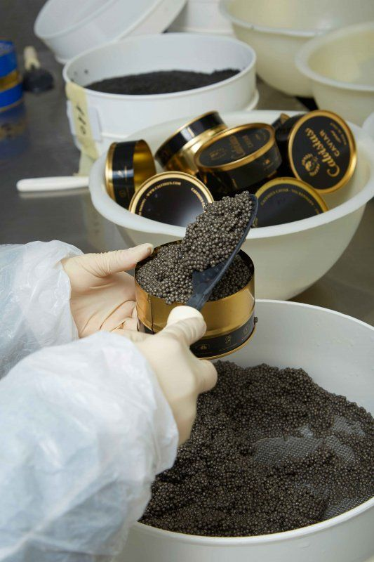 Calvisius Caviar il caviale made in Italy.foto2Calvisius-Caviar_MilanoPlatinum