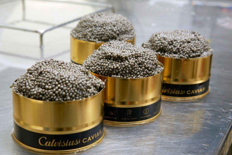 Calvisius Caviar il caviale made in Italy.foto3Calvisius-Caviar_MilanoPlatinum