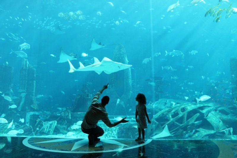 In vacanza a Dubai, 5 motivi per scegliere Atlantis, The Palm_acquario_MilanoPlatinum