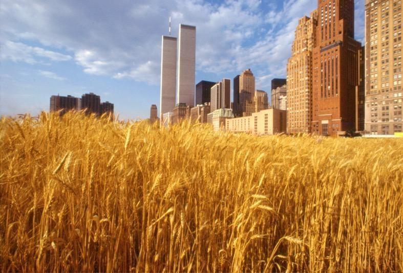 Wheatfield: ti ricordi di un campo di grano?_profile_MilanoPlatinum