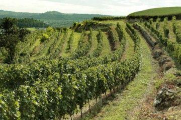 Vini migliori del mondo, c'è anche l'Amarone Piovesole_vigna_MilanoPlatinum