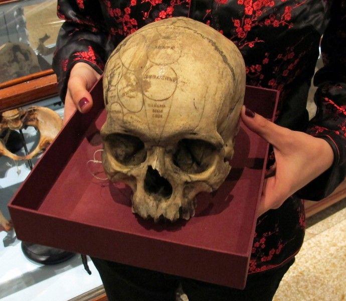 Esempio di cranio lombrosiano. Firenze, Museo di storia naturale, sezione biomedica