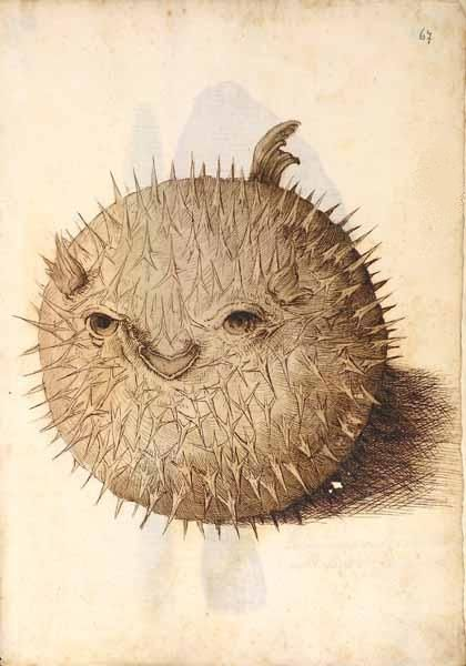 """Disegno di uno dei """"naturalia"""" della collezione Settala (http://bibliodyssey.blogspot.it/2006/03/settalas-wunderkammer.html)"""