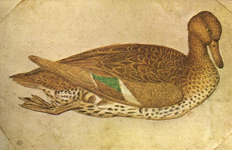 Pisanello - Anatra, Cabinet des Dessins, Louvre - Public Domain via Wikipedia commons
