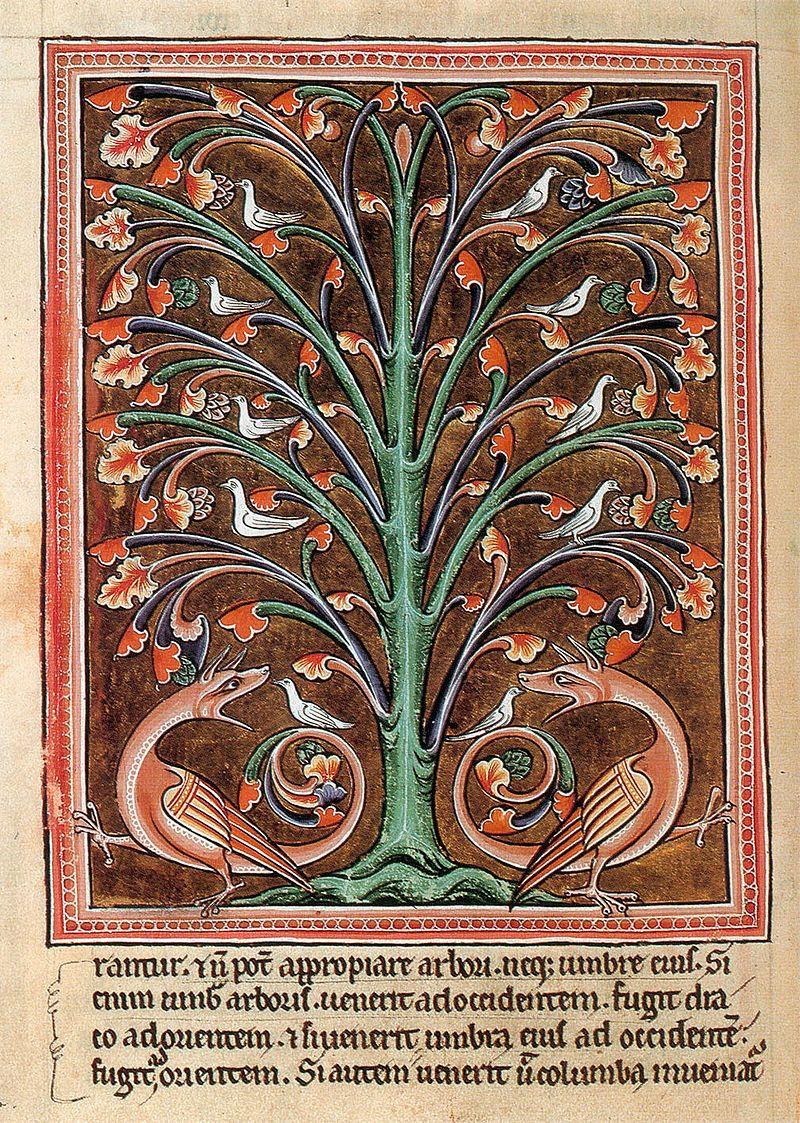Una pagina del bestiario di Aberdeen, XII sec., Folio 65 recto, Perindens tree (Perindens) - Public Domain via Wikipedia Commons