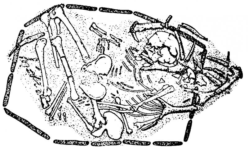 By M. Péquart, S.J. Péquart, M. Boule & H. Vallois, [Public domain], via Wikimedia Commons