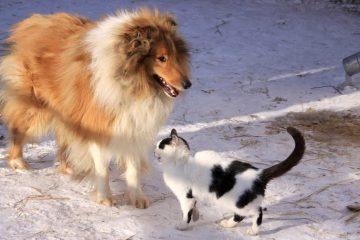 Animali domestici - ©torange.biz, Creative Commons Attribuzione 4.0 Internationalz