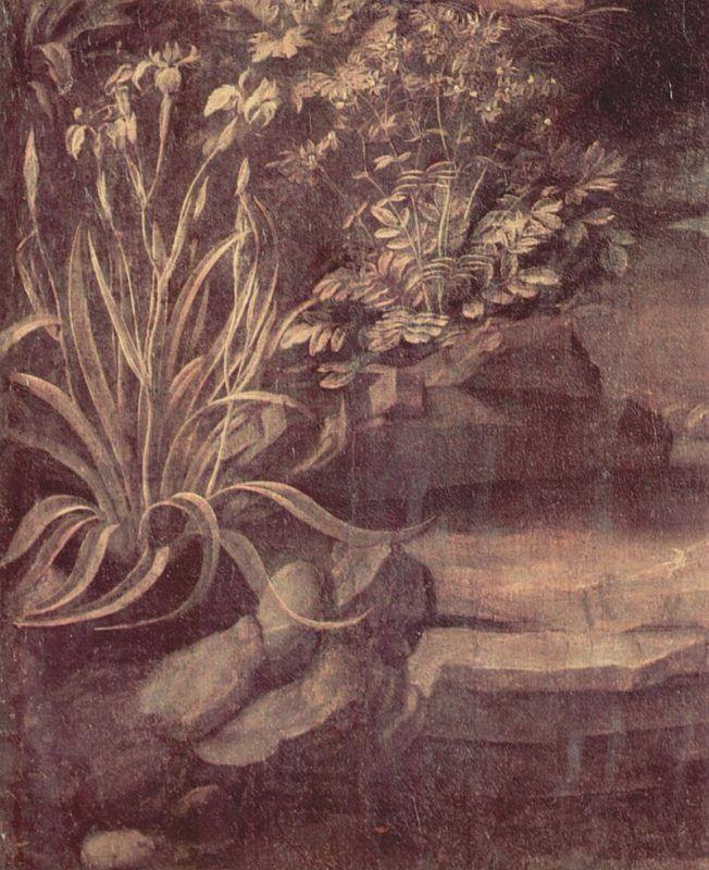 Vergine delle rocce - Dettaglio botanico - Public Domain via Wikipedia Commons