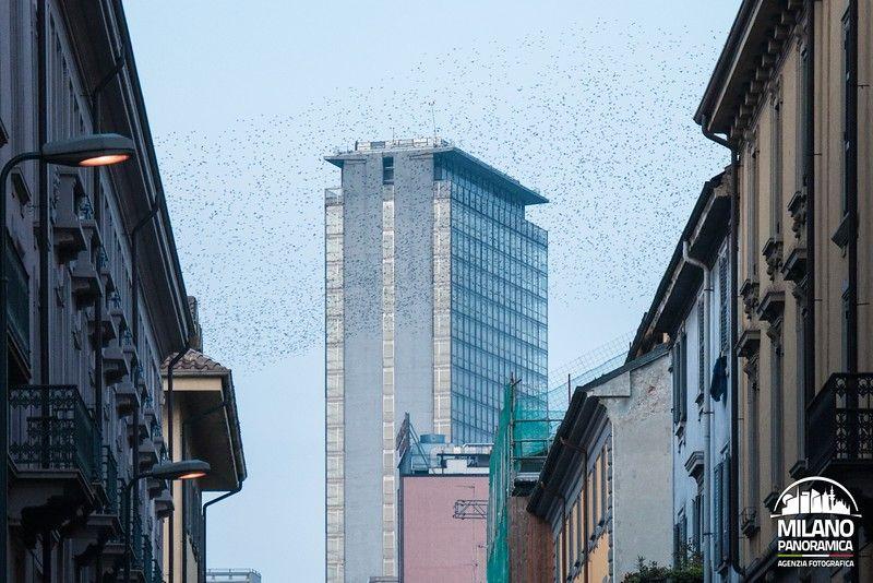 La Torre Galfa e le rondini