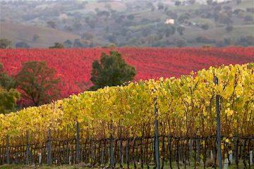 DOC-Maremma-Toscana-3-rid