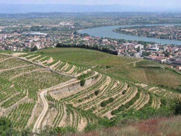 La-ville-de-Tain-l'hermitage-et-ses-vignobles-(Drôme,-France)_Par-Béa-sur-Wikipedia-français-(Travail-personnel)-[Public-domain],-via-Wikimedia-Commons