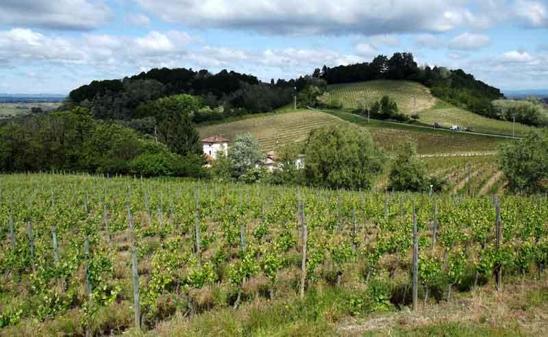Gavi_zona_di_produzione_By-F-Ceragioli-(Own-work)-[CC-BY-SA-3.0],-via-Wikimedia-Commons