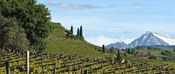 Azienda vinicola Alois Lageder, Alto Adige