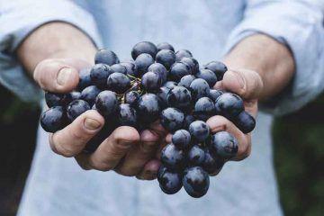 grapes CC0 Creative Commons, via Pixabay