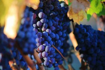 grapes-2749369_1920_CC0 Commons, via Pixabay