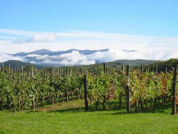 [Slovenian Karst (Kras) region, in the distance mount Nanos. Slovenia - by Ziga, via Wikimedia Commons]