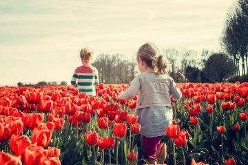 tulipani delle meraviglie