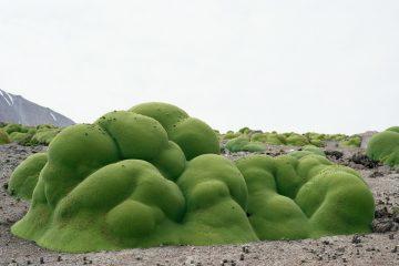 Broken Nature: Design Takes on Human Survival - Triennale di >Milano