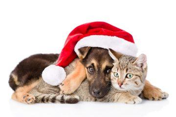 Inverno pet friendly